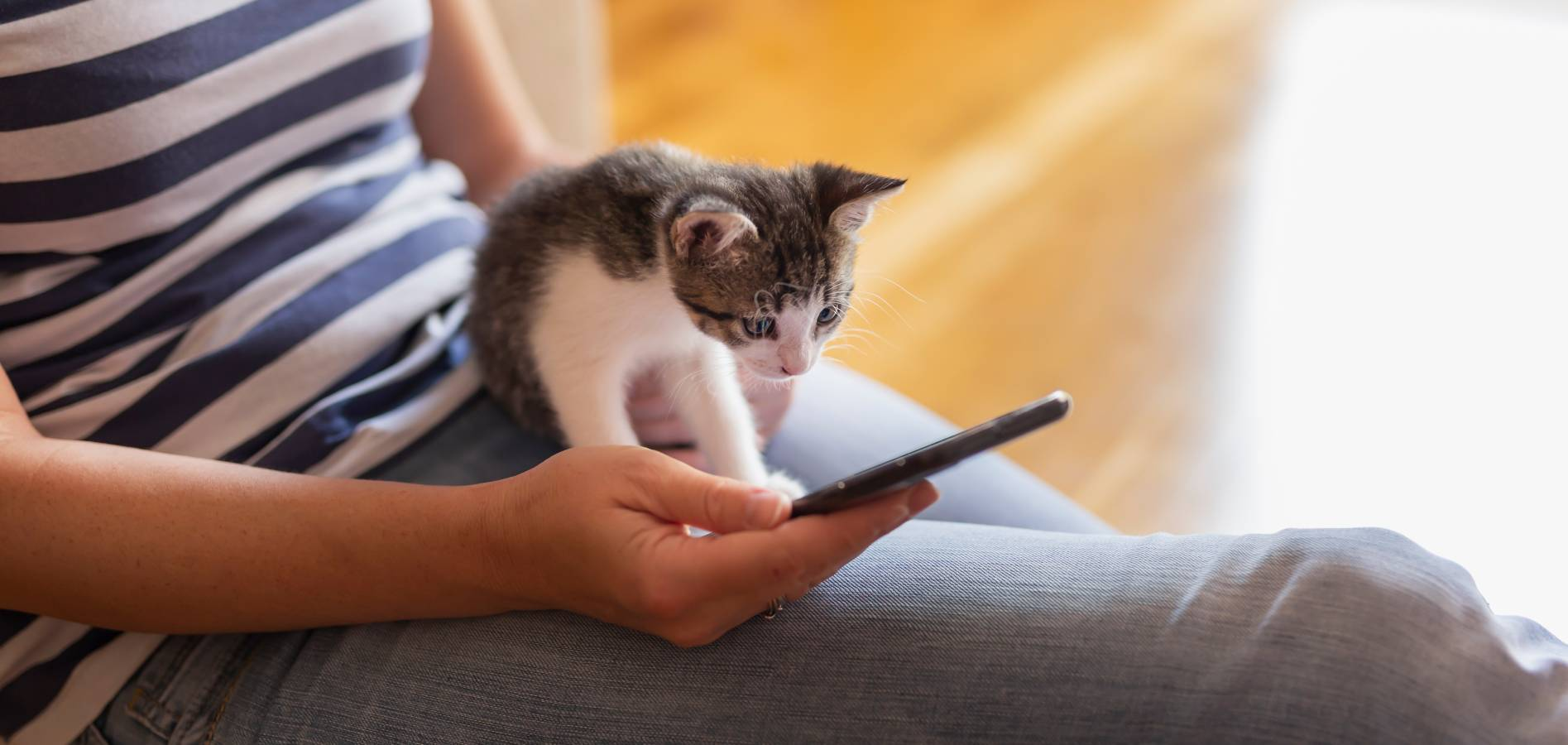 cat looking at owners phone