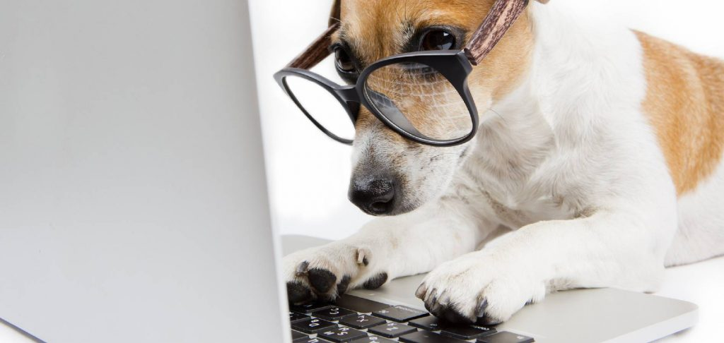 clever dog on computer