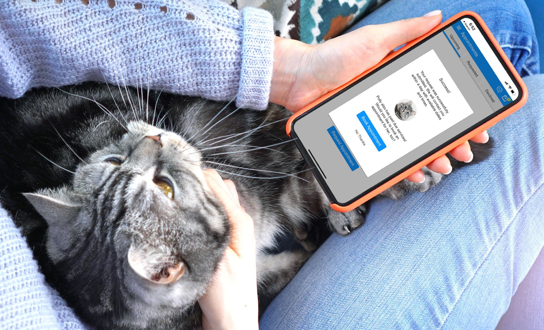 booking online cat in lap