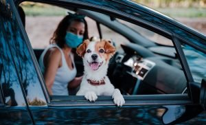 pet owner curbside care with dog covid