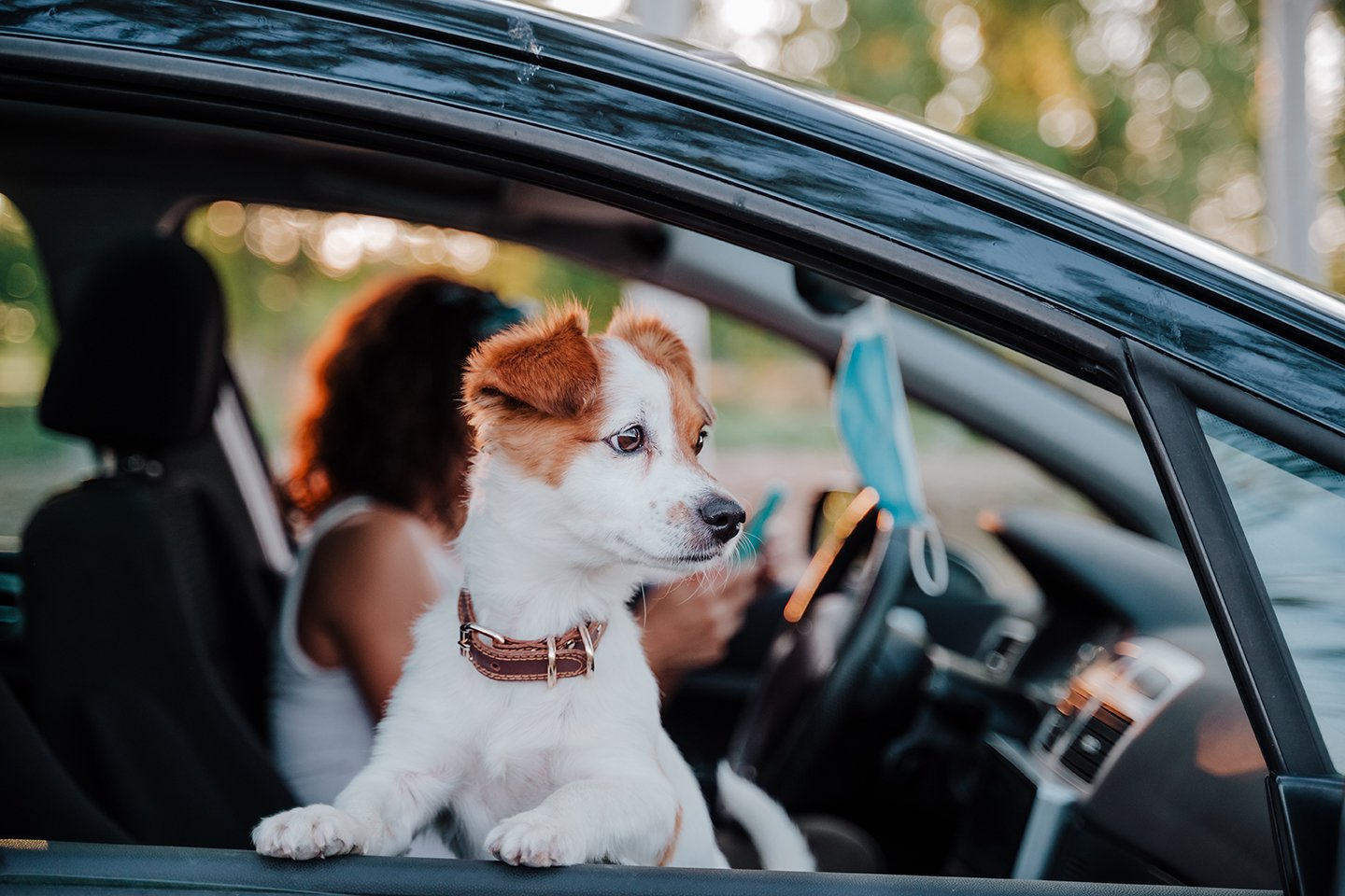 dog awaiting veterinary curbside check-in