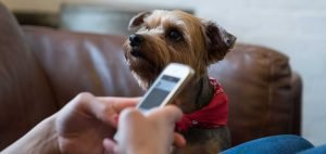 client using veterinary telemedicine app