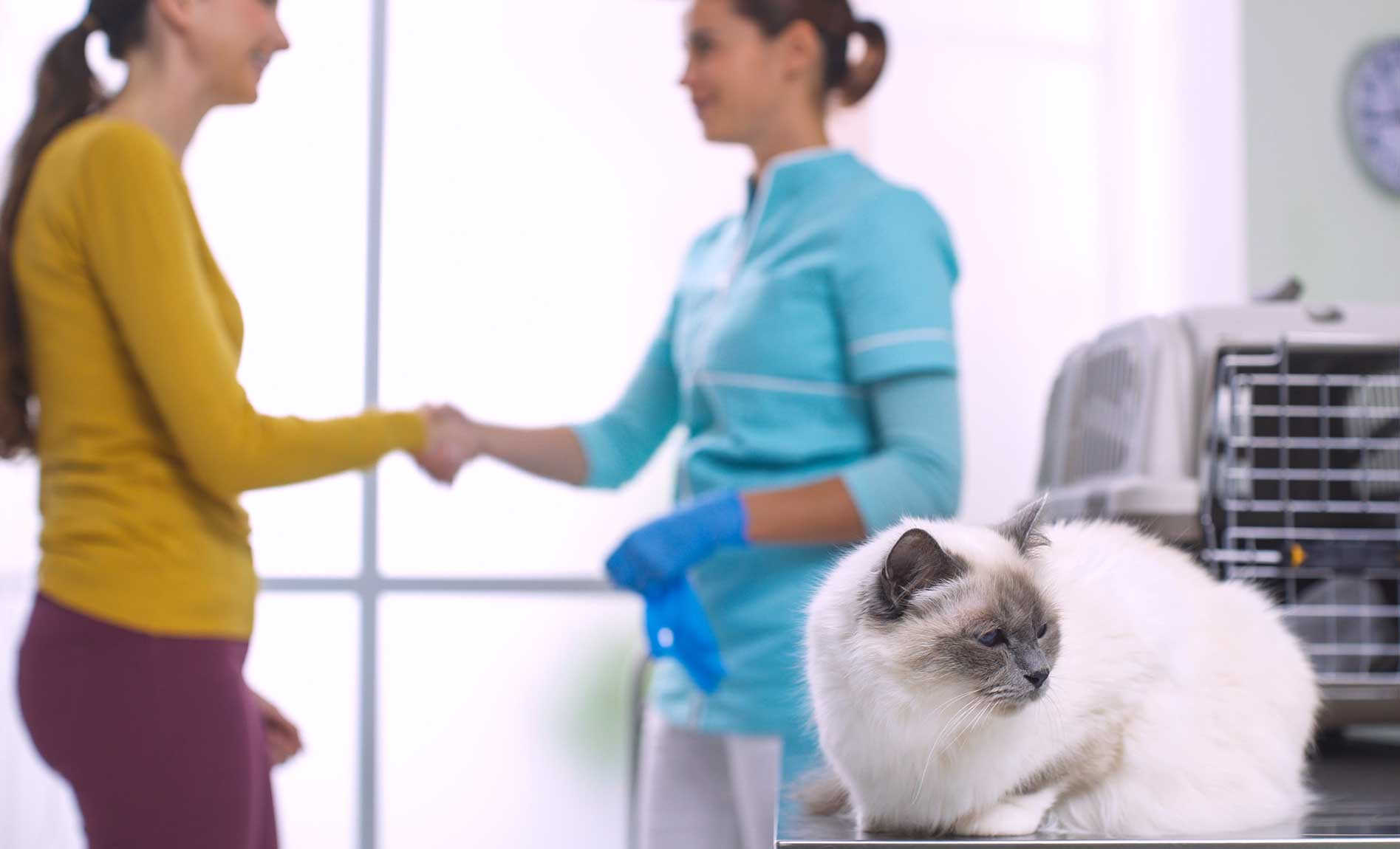 client with pet at veterinary hospital