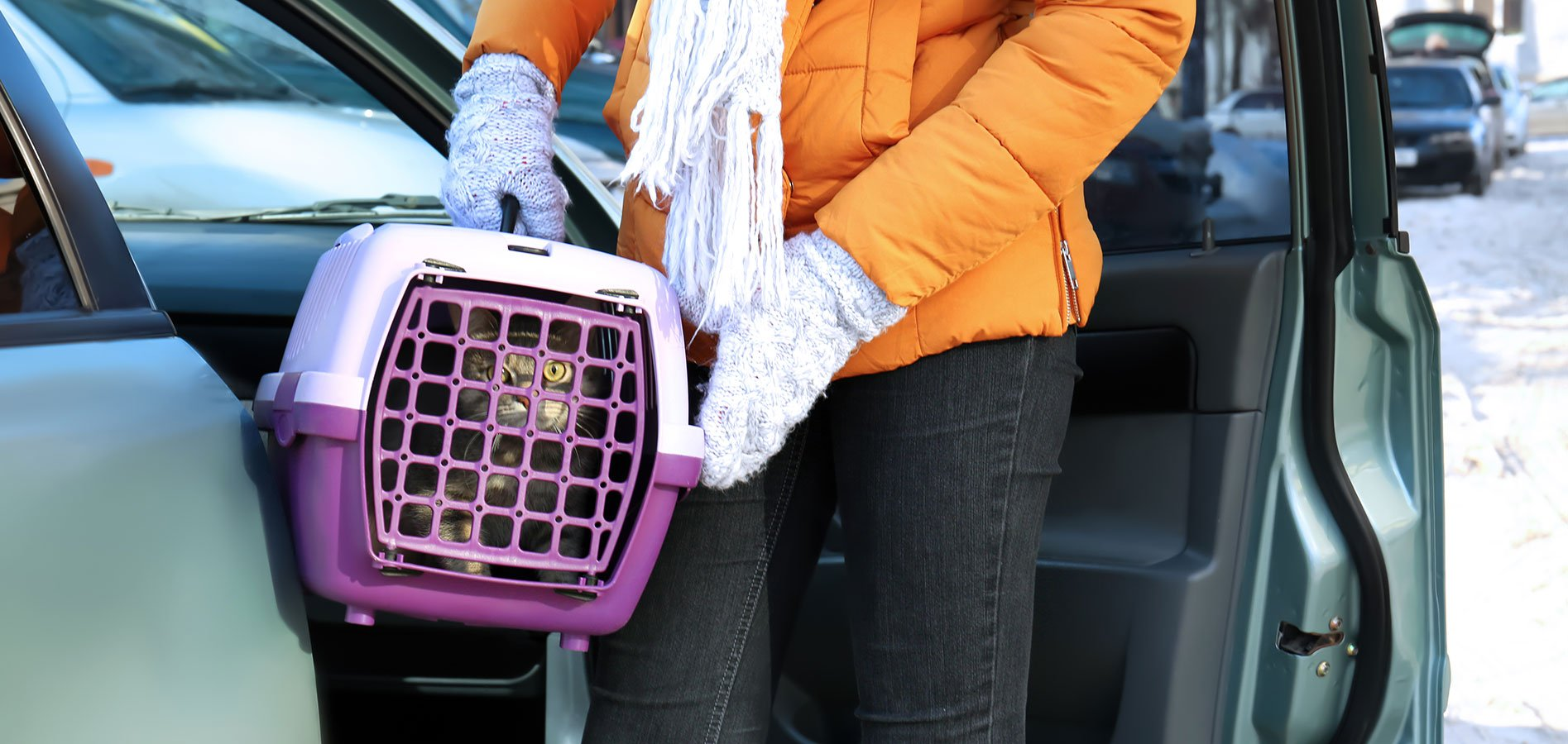 cat owner veterinary curbside drop off