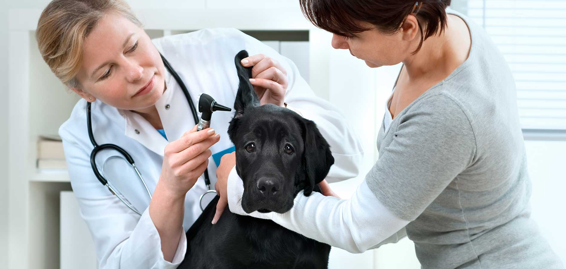 veterinarian checking dog with owner
